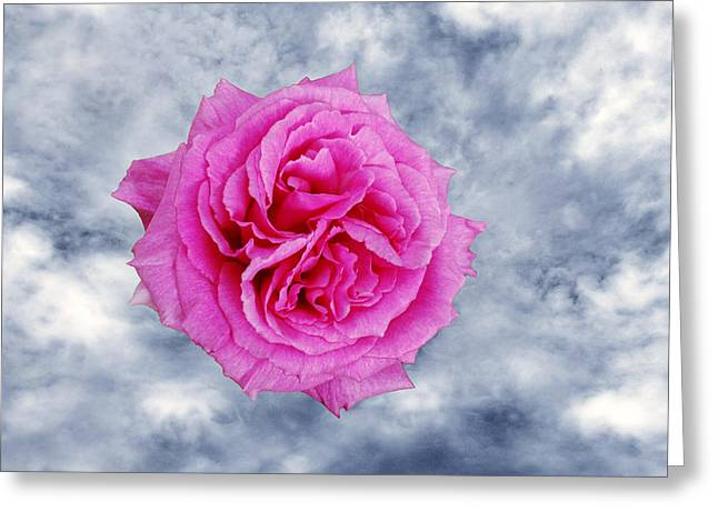 Heavenly Rose Greeting Card by Terence Davis