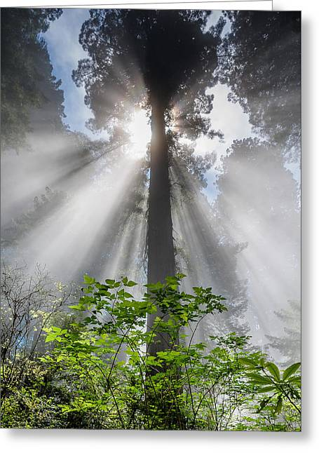 Heaven's Light Greeting Card by Greg Nyquist
