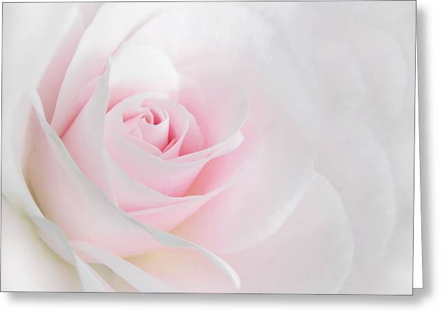 Heaven's Light Pink Rose Flower Greeting Card by Jennie Marie Schell