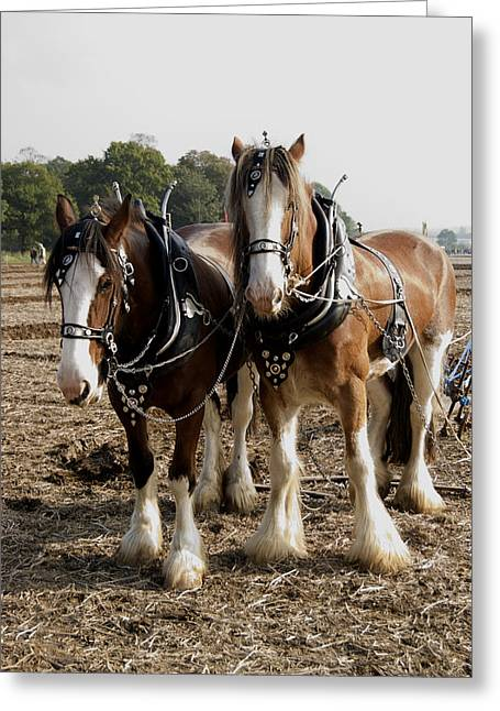 Heavy Horses Greeting Card by Gerry Walden