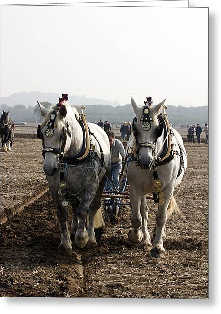 Heavy Horses Working Greeting Card by Gerry Walden
