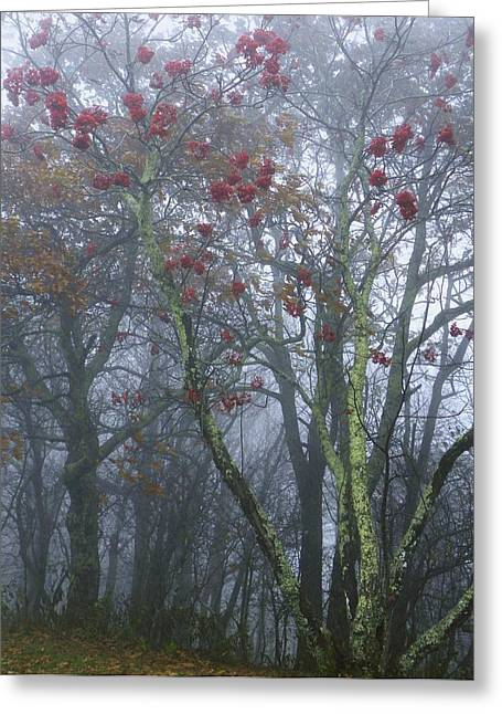 Heavy Mist Greeting Card by Cindy Gacha