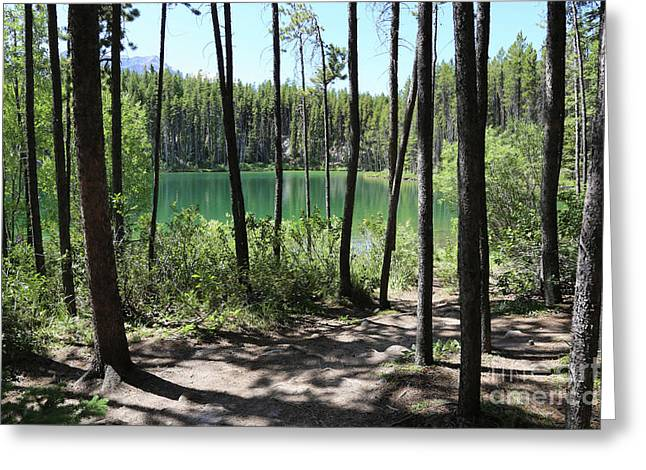 Hector Lake Through The Trees Greeting Card