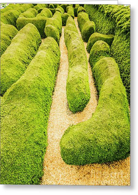 Hedging An Escape Greeting Card