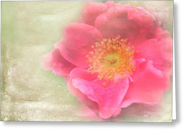 Heirloom Rose Greeting Card