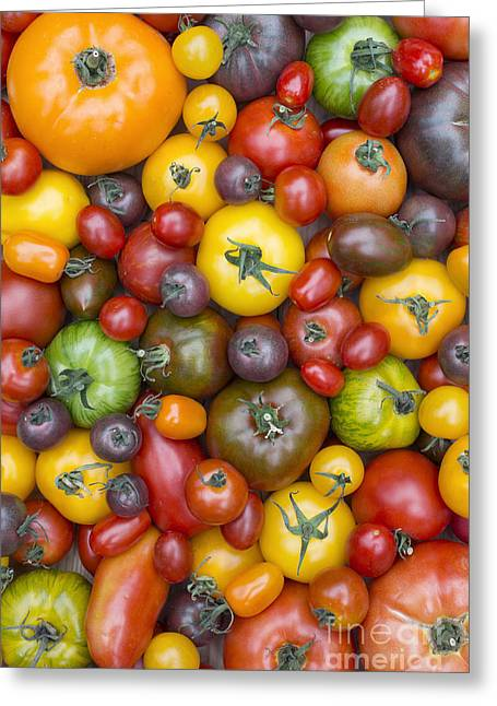 Heirloom Tomatoes Pattern Greeting Card by Tim Gainey