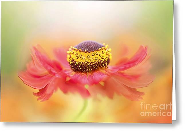 Helenium Flower Greeting Card