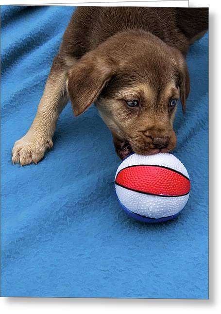 He'll Grow Into It - Puppy And Ball Greeting Card