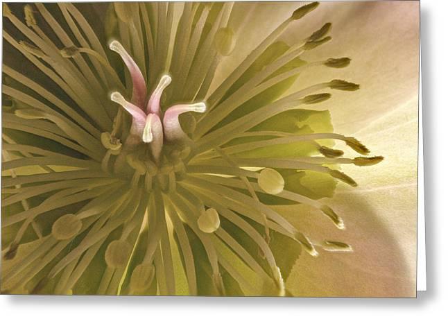 Hellebore Detail Greeting Card by Jean Noren