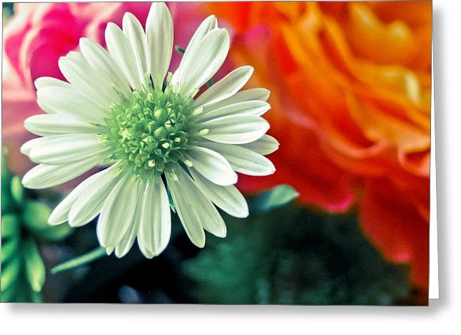 Hello Daisy Greeting Card by Colleen Kammerer