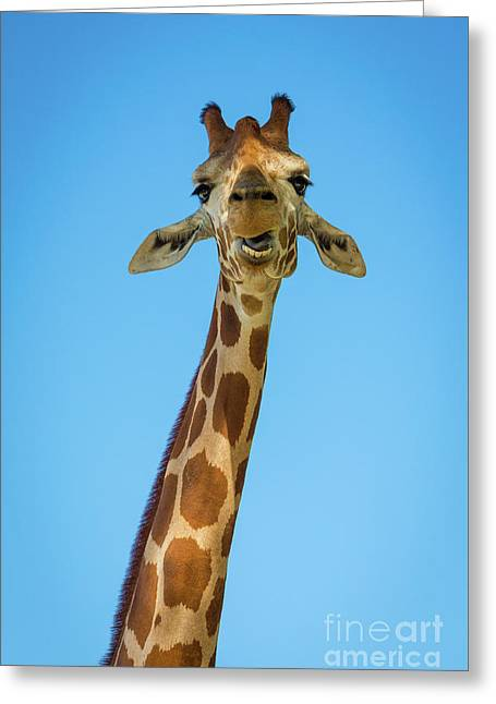 Hello Giraffe Greeting Card by Inge Johnsson