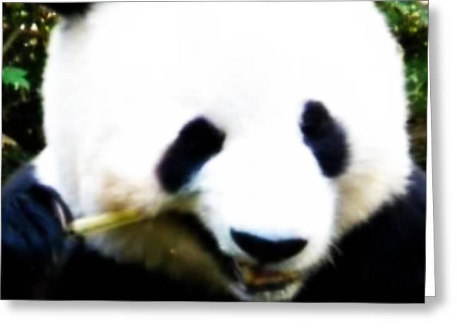 Hello Panda Greeting Card