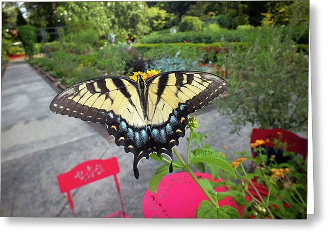 Hello Swallowtail  Greeting Card