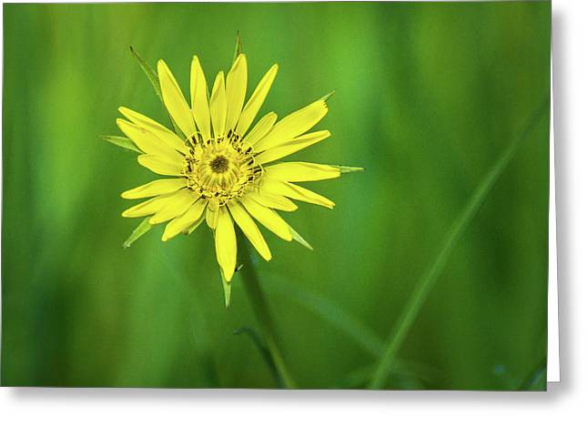 Greeting Card featuring the photograph Hello Wild Yellow by Bill Pevlor