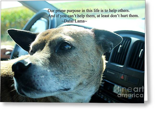 Greeting Card featuring the photograph Help Others by Beauty For God