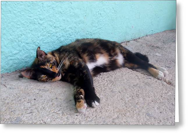 Hemingway Cat Greeting Card by JAMART Photography