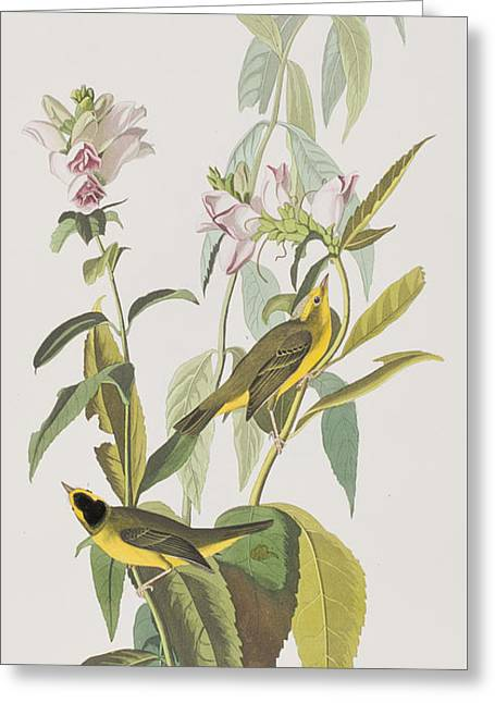 Hemlock Warbler Greeting Card