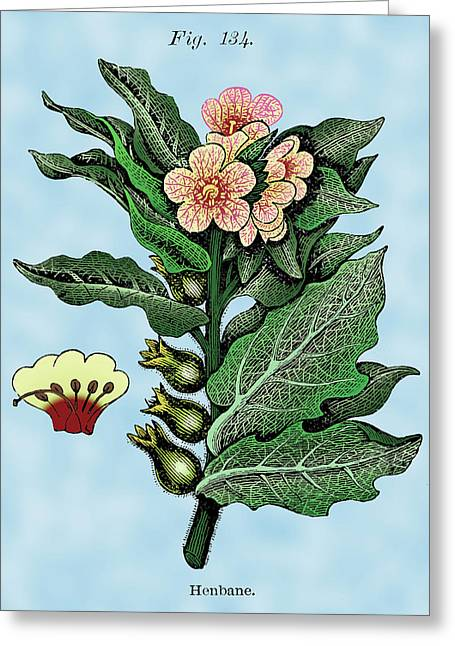 Long-lasting Greeting Cards - Henbane Greeting Card by Ziva