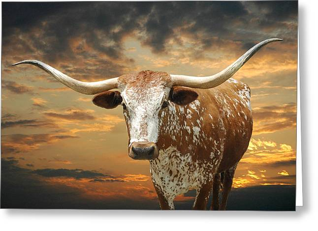 Henly Longhorn Greeting Card by Robert Anschutz