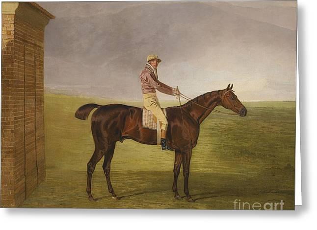 Henry Vansittart Chestnut Colt Burleigh Greeting Card by MotionAge Designs