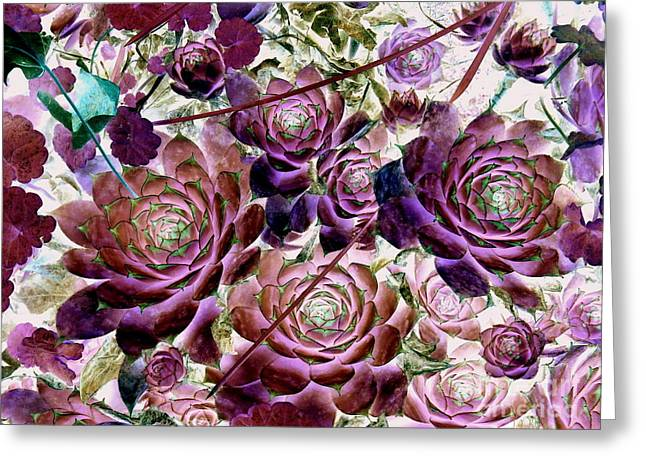 Hens And Chicks - Plum Rose Greeting Card