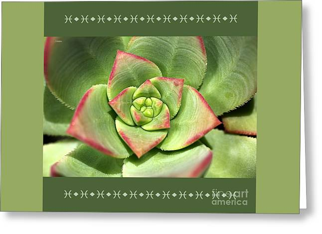 Hens And Chicks Succulent And Design Greeting Card by Joy Watson