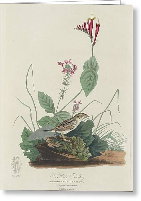 Henslow's Bunting Greeting Card