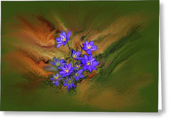 Hepatica Nobilis Painterly #h4 Greeting Card