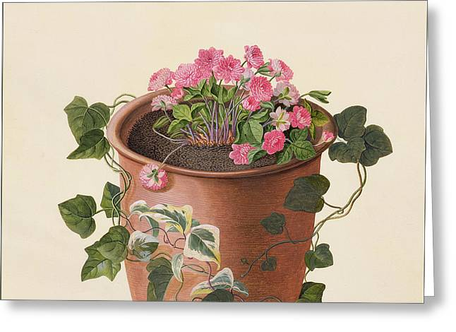Hepatica Trifolia Greeting Card by Georg Dionysius Ehret