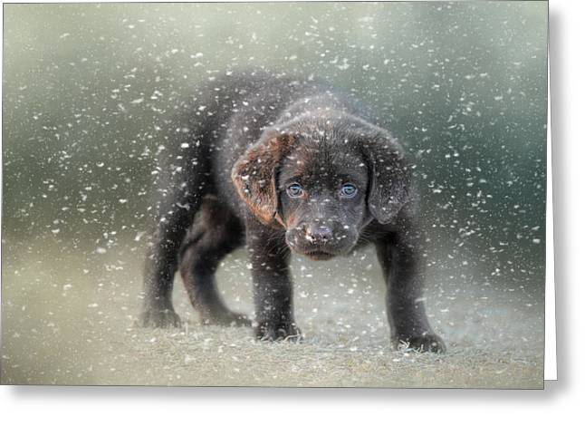 Her First Snow Greeting Card by Jai Johnson