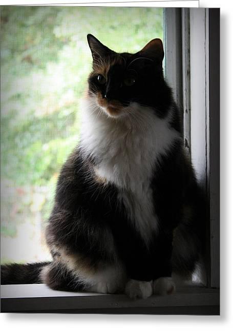 Her Window Greeting Card by Mandy Shupp