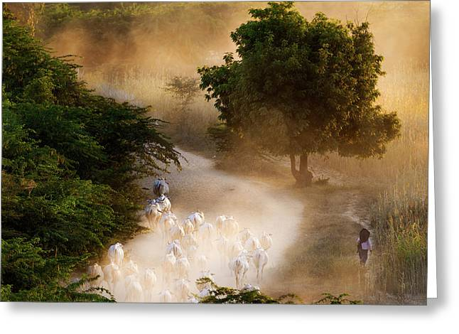 herd and farmer going home in the evening, Bagan Myanmar Greeting Card