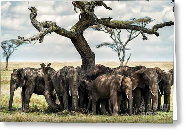 Herd Of Elephants Under A Tree In Serengeti Greeting Card