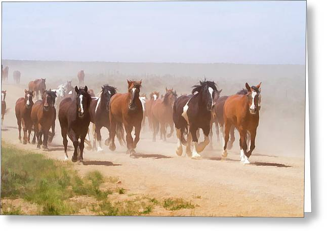 Herd Of Horses During The Great American Horse Drive On A Dusty Road Greeting Card