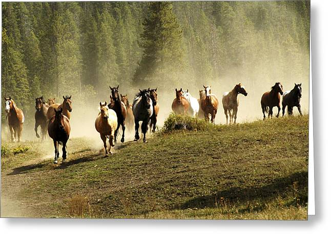 Herd Of Wild Horses Greeting Card