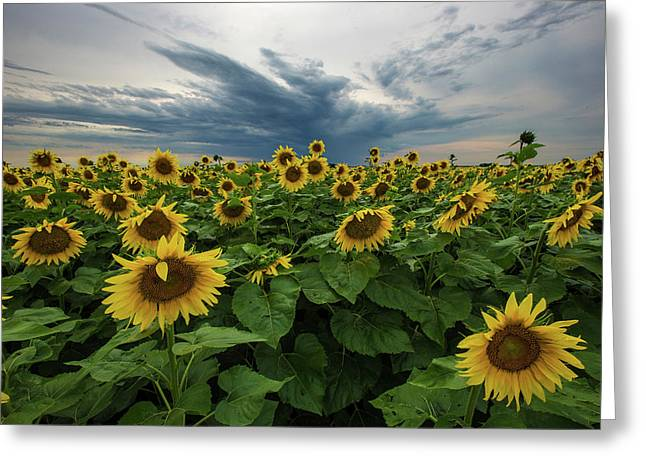 Here Comes The Sun Greeting Card by Aaron J Groen