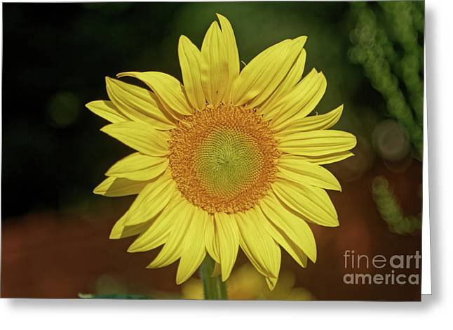 Here Comes The Sunflower Greeting Card