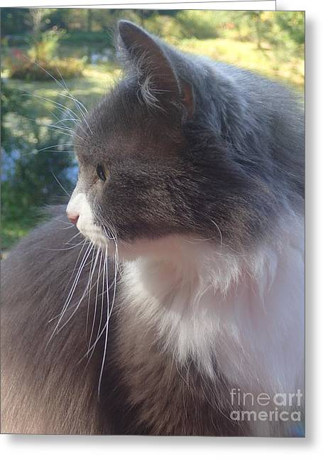 Here Kitty Greeting Card