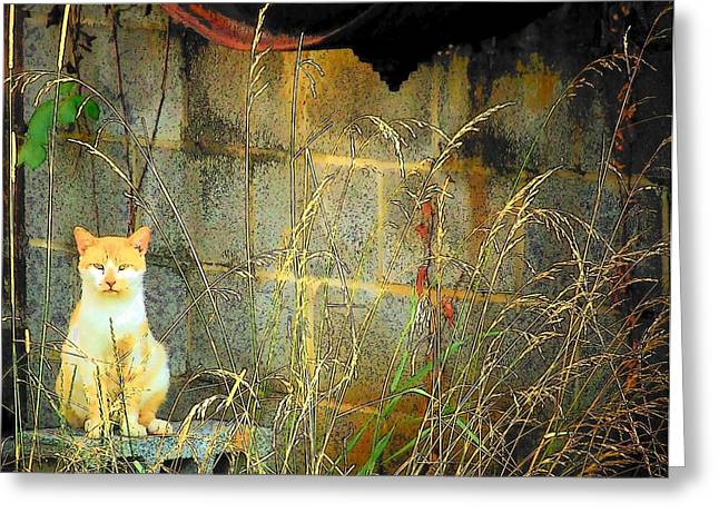 Here Kitty Kitty Kitty Greeting Card by Michael L Kimble
