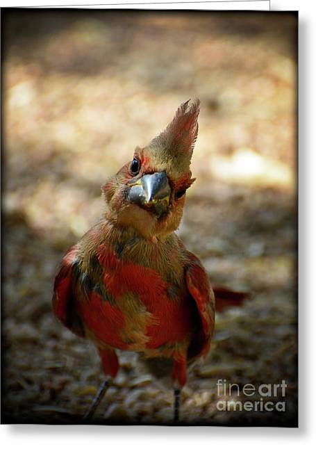 Fledglings Greeting Cards - Heres Looking at Ya Greeting Card by Saija  Lehtonen