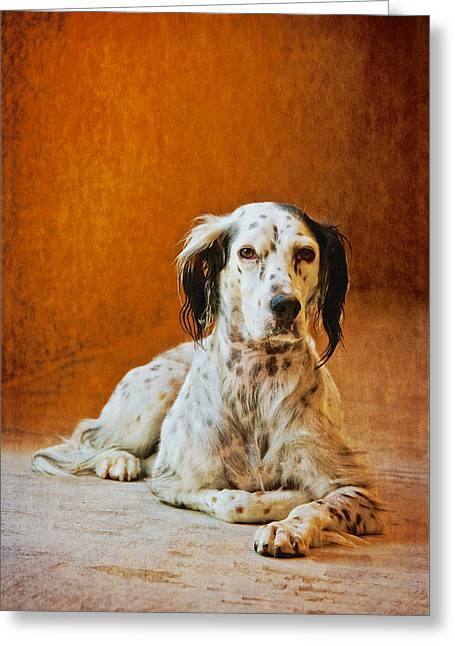 Being The Dog, English Setter  Greeting Card by Flying Z Photography By Zayne Diamond