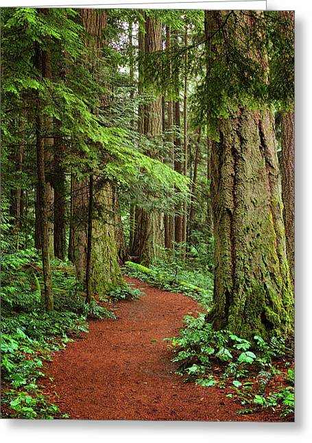 Heritage Forest 2 Greeting Card by Randy Hall