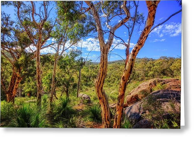 Heritage View, John Forest National Park Greeting Card