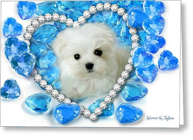 Hermes The Maltese And Blue Hearts Greeting Card