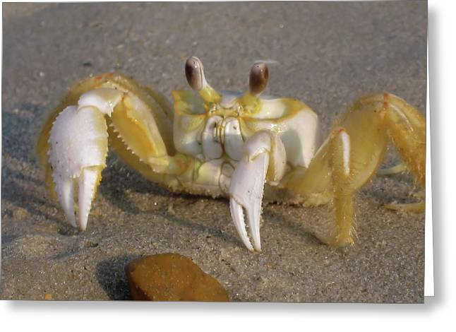 Hermit Crab Greeting Card by JAMART Photography