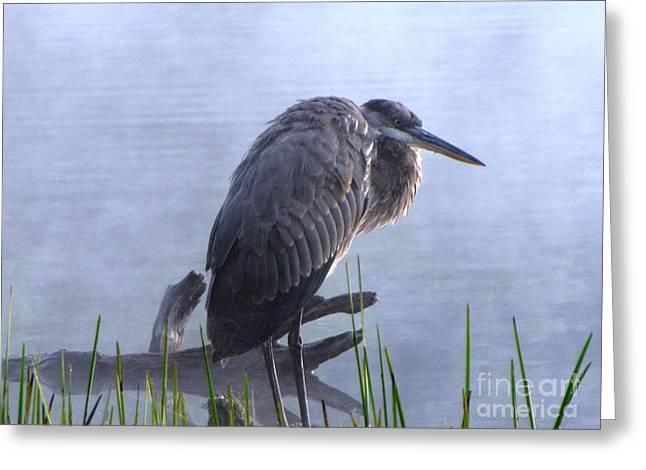 Heron 5 Greeting Card by Melissa Stoudt