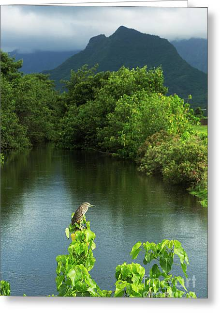 Heron At Kawainui Marsh Greeting Card