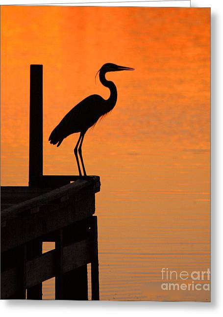 Heron At Sunset Greeting Card by Clayton Bruster