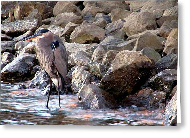Heron At Sunset Greeting Card by Nicole I Hamilton