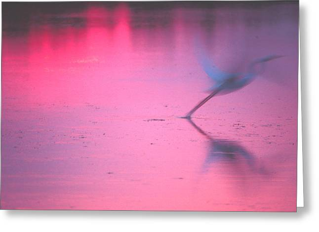 Heron At Sunset Greeting Card